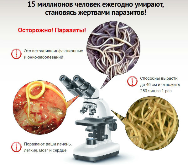 таблетки intoxic средство от паразитов в организме человека
